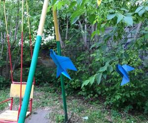 Голубь-сизокрылый